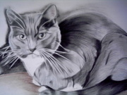 Cat Pencil Portraits drawn from your own photosby southampton Artist
