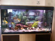TROPICAL FISH AND FISHTANK
