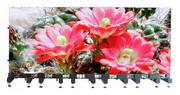LED Display Screen for the Rental market - LSR-Mage