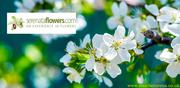 Receive up to 20% OFF on Serenata Flowers Discount Code & Voucher Code