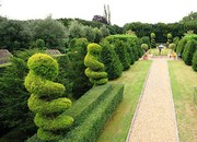 Garden Plants and Trees Nursery In UK | Pleached Trees