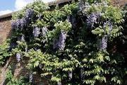 Best and Organic Fruit Trees Nursery In UK | Greenhills Nursery Ltd