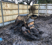 Hire For Tree Stump Removal Services