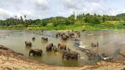 Best Sri Lanka holiday deals | Best time to travel Sri Lanka