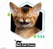 Best Online Store for Cat and Kitten Supplies