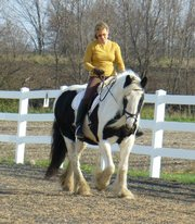 (Harriet)Gypsy Vanner Mare for Adoption