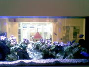 Cheap Aquarium maintenance services in London